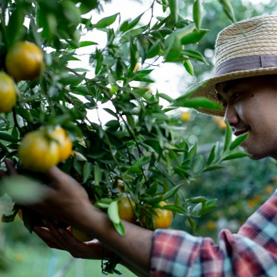 Aziende agricole con dipendenti: chiarimenti Inps sull'inquadramento previdenziale